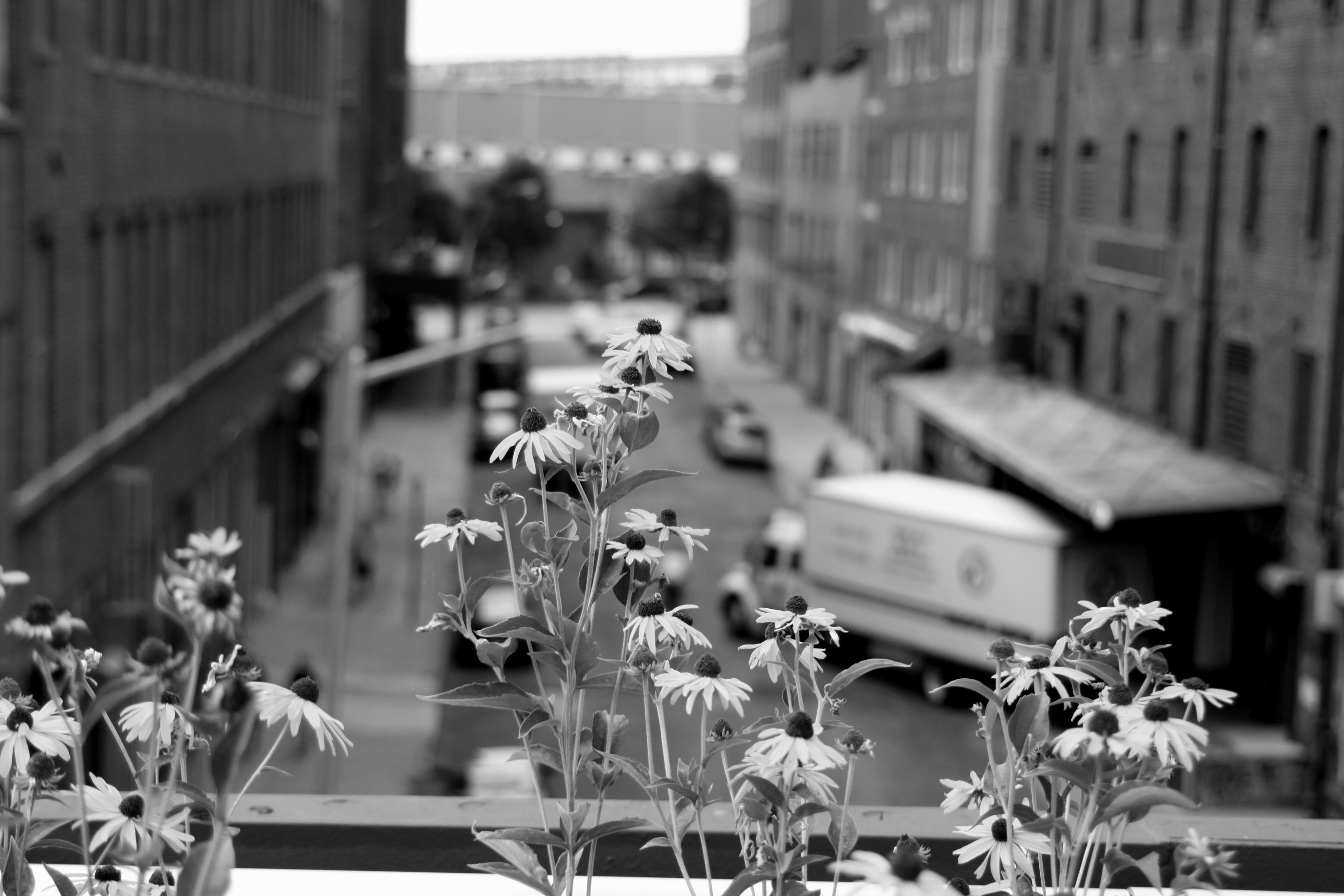 HRExaminer-NYC-61-Highline