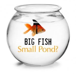 big-fish-small-pond-debate