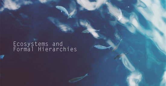 photo of fish in water representing fish in ecosystem of ocean hrexaminer.com john susmer january 26 2016