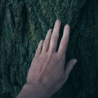 photo of hand touching tree in feature image on HRExaminer.com article Sense Making by John Sumser