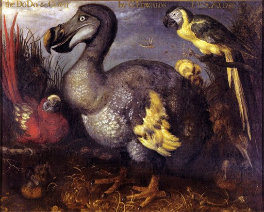 2017-07-07 HRExaminer feature img v827 will hr go way of the dodo bird photo img edwards dodo bird by roelant savery 1620 544x437px.jpg